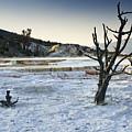 Dead Wood Springs by Chad Davis