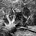 Deadwood by Jarmo Honkanen