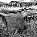 Deadwood On Cherry Creek Trail 2 by Robert Meyers-Lussier