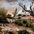 Deadwood Sunset by Michael  Romano