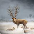 Deer Cool Tone by Somchai Chitprathak