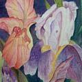Dear Iris by Vijay Sharon Govender