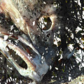 Death Of A Wild Tarpon by Thomas Carroll