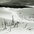 Death Valley Brush by Norman Andrus