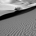 Death Valley by Lusi Morhayim