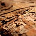 Debarked Tree by Nicholas Miller