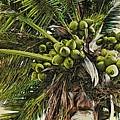 Debbie's Coconuts by Alice Gipson