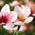 Decadent Spring Delight by Clare Bevan
