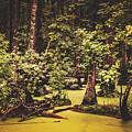 Decayed Vegetation - Run Swamp, North Carolina by Library Of Congress