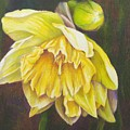 December Flower Narcissus by Janae Lehto