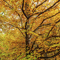 Deciduous Forest In The Autumn by Catalin Petolea