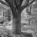 Deciduous Tree Ir by Bob Neiman