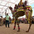 Decorated Camel Pushkar by Doug Matthews