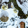 Decorations In The Snow by Nicola Simeoni