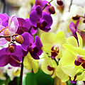 Decorative Orchids Still Life B82418 by Mas Art Studio