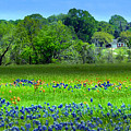 Decorative Texas Homestead Bluebonnets Meadow Mixed Media Photo H32517 by Mas Art Studio