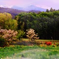 Deep Breath Of Spring El Valle New Mexico by Anastasia Savage Ealy