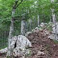 Deep Forest Rocky Path Nature by Goce Risteski