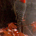 Deep In The Forest Woodpecker by Debra     Vatalaro
