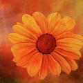 Flower by Terry Davis