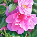 Deep Pink Camellias by Sharon Freeman