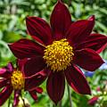 Deep Red And Yellow Flowers by John Haldane