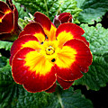 Deep Red Bright Yellow by Wayne Henry