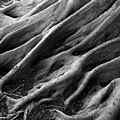 Deep Roots by David April