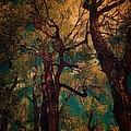 Deep Trees by Sarah Jane Thompson