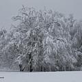 Deep Winter by Shari Nees