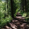 Deep Woods Road by Ben Upham III