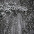 Deep Woods Snow by Peter  McIntosh