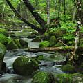 Deep Woods Stream by Glenn Gordon
