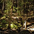 Deep Woods Trail by Jim Turri