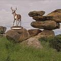 Deer 11 by Pemaro