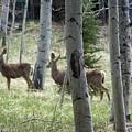 Deer And Aspen by Pamela Walrath