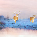 Deer At Winter Pond by Laura D Young