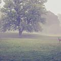 Deer By Barn On A Foggy Morning by Maxwell Dziku