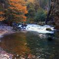 Deer Creek In Autumn by Frank Wilson