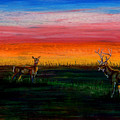 Deer Dawn by Laurie Tietjen