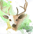 Deer  by Emily Page