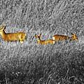 Deer Family by Al Bourassa