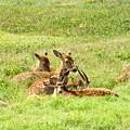 Deer Family by Jai Johnson