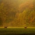 Deer Run by Peter Jiang