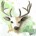 Deer II by Emily Page