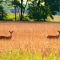 Deer In A Field by Carol J Deltoro