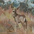 Deer In A Field by Synnove Pettersen