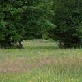 Deer In A Meadow At Dawn by Lise Winne