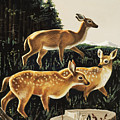Deer In Forest Clearing by English School
