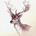Deer In Ink by Michael Vigliotti